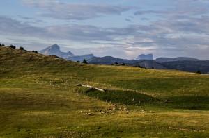 bergeriehauts plateaux